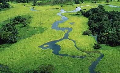 amazônia amsterdã