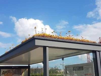 abelhas holanda