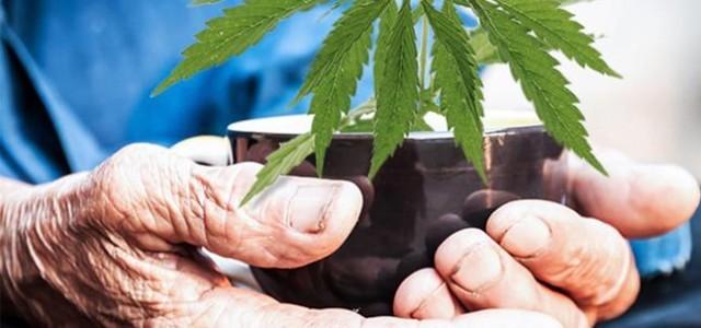 cannabis latam