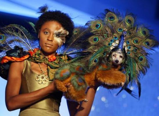 Pet Fashion Week nos Estados Unidos.