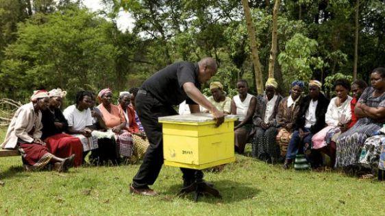 A instituição Honey Care Africa foi a vencedora na edição de 2014.