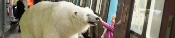Ação de live mkt leva urso polar às ruas de Londres