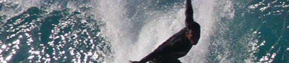Star Point cria game para incentivar o mercado do surf