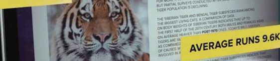 Ação da WWF desafia internautas a competirem com tigres