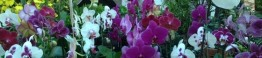 Feira de Orquídeas - Creditos Maira Guedes (1)_d