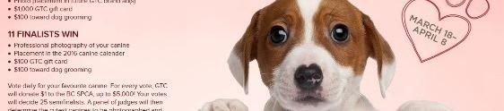 Ação promo em Vancouver ajuda cães abandonados