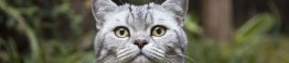 catscam whiskas 1