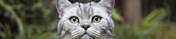 Whiskas cria Instagram para gatos