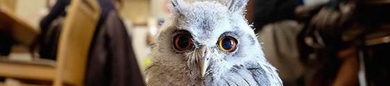 Annie The Owl leva corujas a bar de Londres
