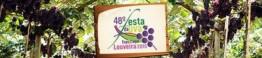 festa da uva de louveira 1_d