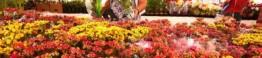festival flores de holambra em recife_d