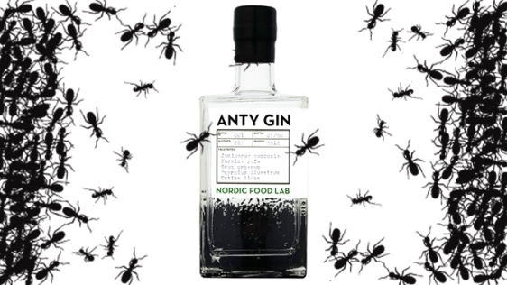 ant-gin-hed-2015