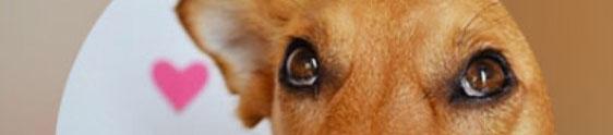 Aplicativo vai ajudar cães abandonados