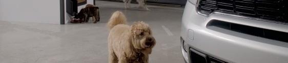 Cães mostram novo Mini Next em ação de live mkt